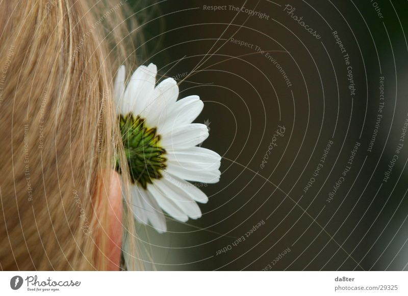 Woman Girl Flower Plant Hair and hairstyles Blonde Ear Daisy
