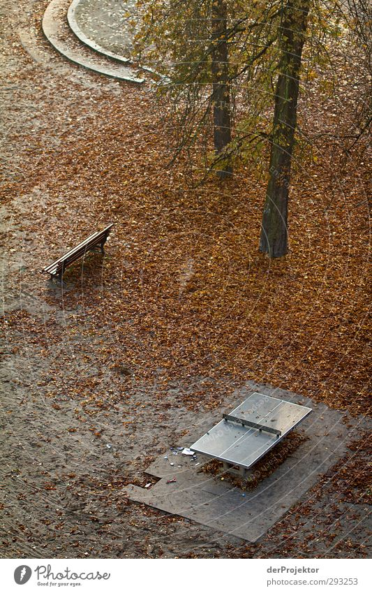 Nature Plant Loneliness Landscape Calm Autumn Emotions Berlin Moody Park Stairs Beautiful weather Longing Serene Pain Tourist Attraction