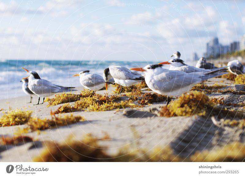 Blue Vacation & Travel White Summer Ocean Animal Beach Yellow Bird Gold Stand Tourism Free Group of animals Skyline Seagull