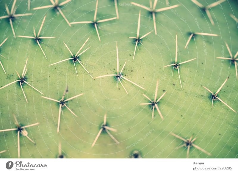 Be prickly! Plant Cactus Exotic Threat Green Thorny Unshaven Protective Protection Defensive Pattern Point Harm Desert Do not touch spades Detail Deserted