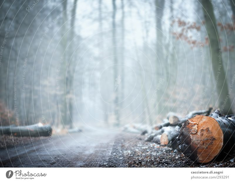 In the forest Nature Plant Autumn Winter Fog Flower Forest Threat Bright Cold Gloomy Gray Orange White Sadness Loneliness Bizarre End Apocalyptic sentiment