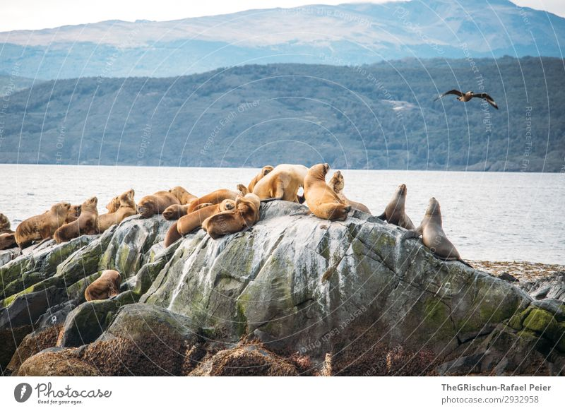 Sea lions Animal Brown White Living thing Water Ocean Cormorant Flying Argentina Bird's colony Colour photo Exterior shot Deserted Copy Space top Morning Day
