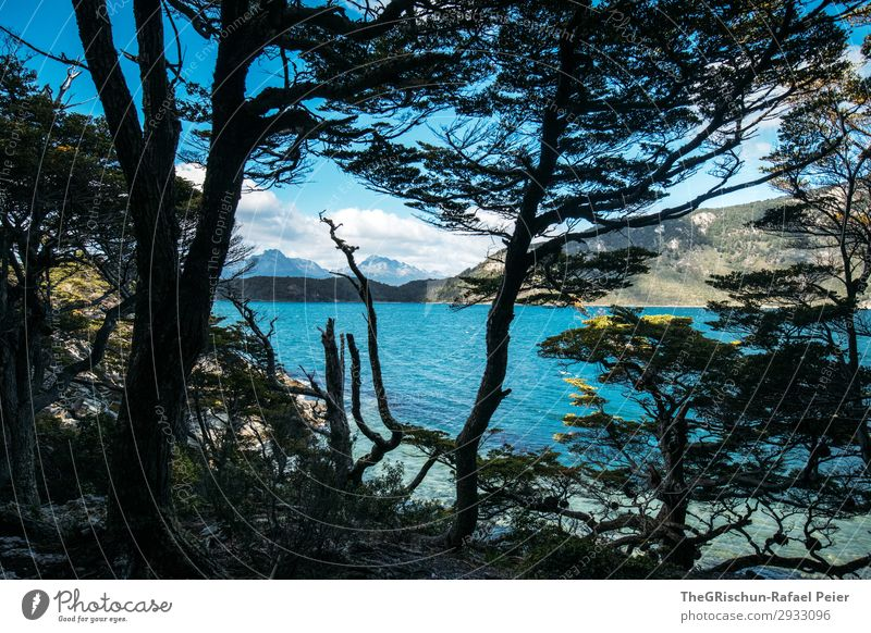 Ushuaia NP Environment Nature Landscape Blue Black Coast Mountain Forest Tree Clouds Hiking Ocean Sea water South America Patagonia Travel photography Discover