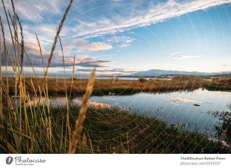 Punta Arenas Nature Landscape Blue Pink Moody South America Chile Reflection Beach Grass Ocean Sea water Clouds Colour photo Exterior shot Deserted