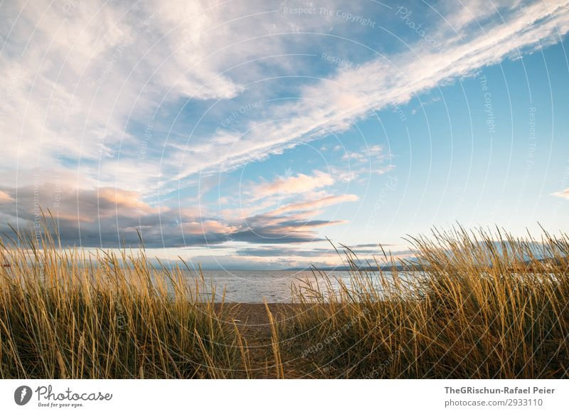 Punta Arenas Nature Landscape Blue Gold Moody Sunset Clouds South America Chile Ocean Beach Grass Colour photo Exterior shot Deserted Copy Space bottom Evening