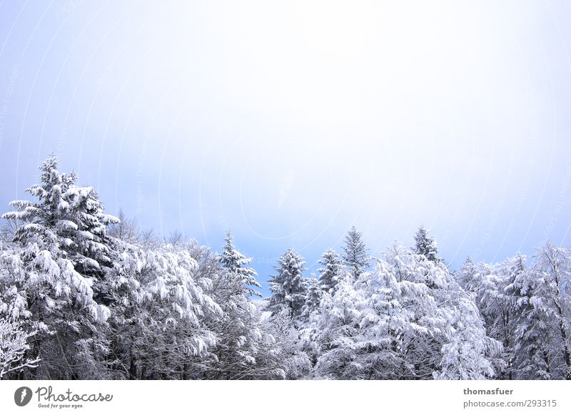 Sky Nature Blue Vacation & Travel Beautiful White Tree Landscape Winter Forest Environment Mountain Cold Snow Bright Dream