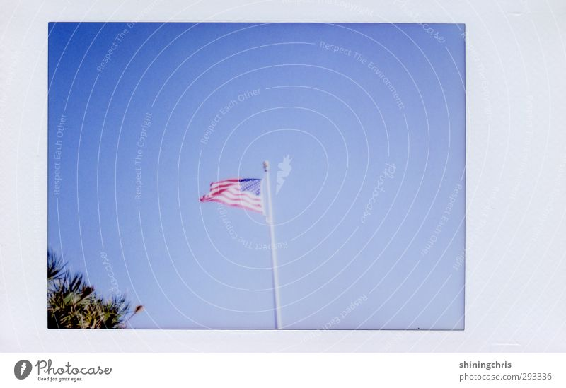 America Vacation & Travel Freedom Sky Cloudless sky Tree American Flag Blue Hospitality Florida Blow Wind Subdued colour Exterior shot Polaroid Copy Space right