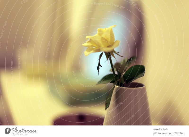 Through the yellow glasses - Rose in vase romantic Valentine's Day Lifestyle Elegant Style Beautiful Wellness Harmonious Well-being Contentment Senses