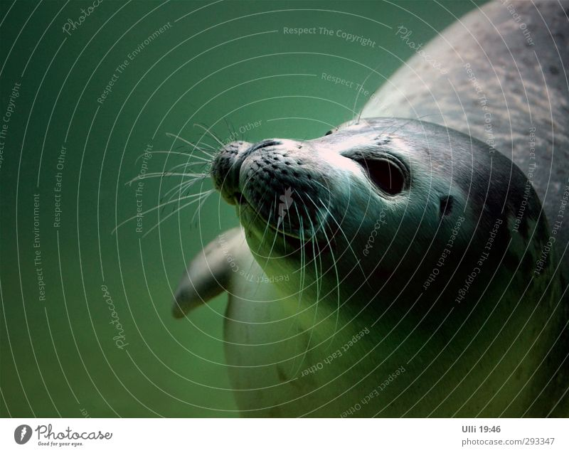 Green Water Ocean Joy Animal Baby animal Playing Gray Swimming & Bathing Power Wild animal Elegant Wet Speed Esthetic Cute