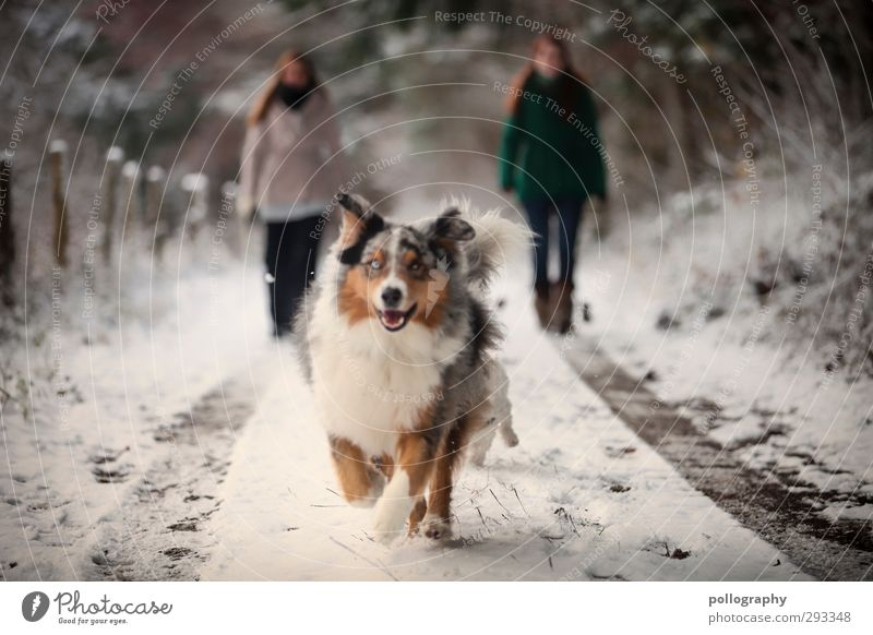 Dog Human being Woman Nature Youth (Young adults) Joy Animal Winter Young woman Forest Adults Snow Feminine Happy 18 - 30 years Contentment