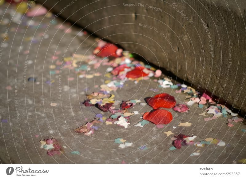 the day after Feasts & Celebrations Carnival Wedding Lie Throw Brown Red Party Event Stairs Confetti Yellowed soiling Dirty Floor covering Rose leaves