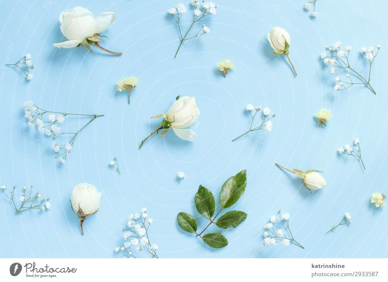 Flowers on a light blue background Design Decoration Valentine's Day Mother's Day Wedding Woman Adults Rose Above Creativity romantic Light blue flat lay