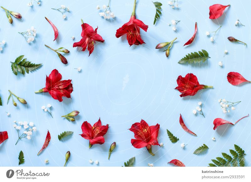 Flowers on a light blue background Woman Red Adults Copy Space Above Design Decoration Creativity Wedding Mother Conceptual design Valentine's Day Mother's Day