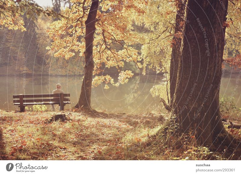 waiting Environment Nature Landscape Autumn Beautiful weather Park Forest Lakeside Wood Brown Contentment Idyll Tree trunk Park bench Human being Water leaves