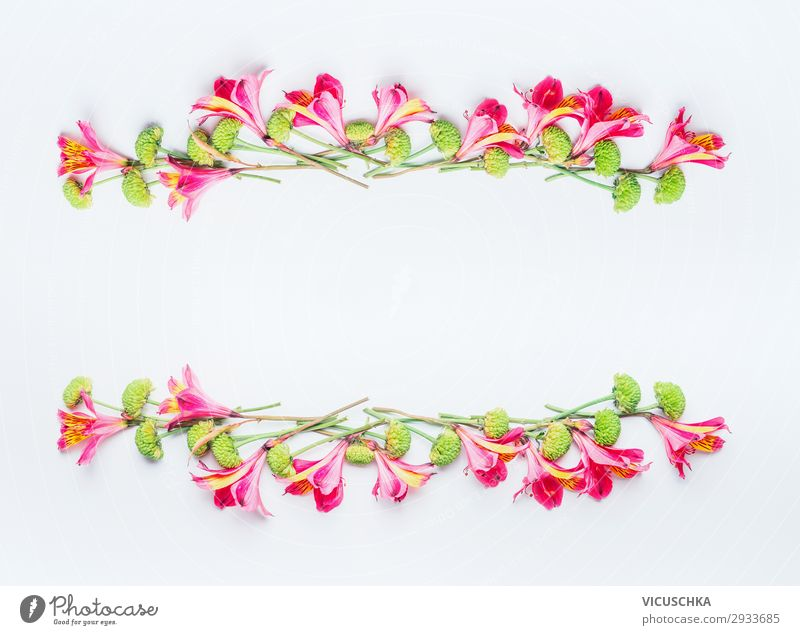 Tropical exotic flowers frame on white Style Design Summer Feasts & Celebrations Nature Plant Spring Flower Blossom Decoration Bouquet Flag Hip & trendy Pink