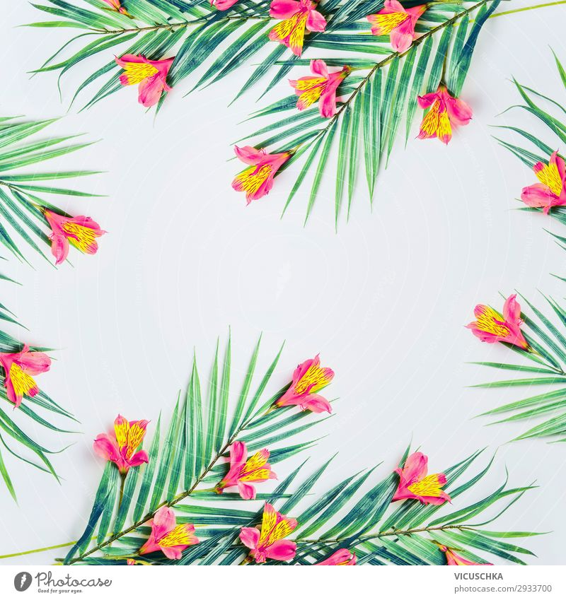White background with tropical palm leaves and flowers Style Design Summer Nature Plant Leaf Fashion Decoration Ornament Hip & trendy Background picture