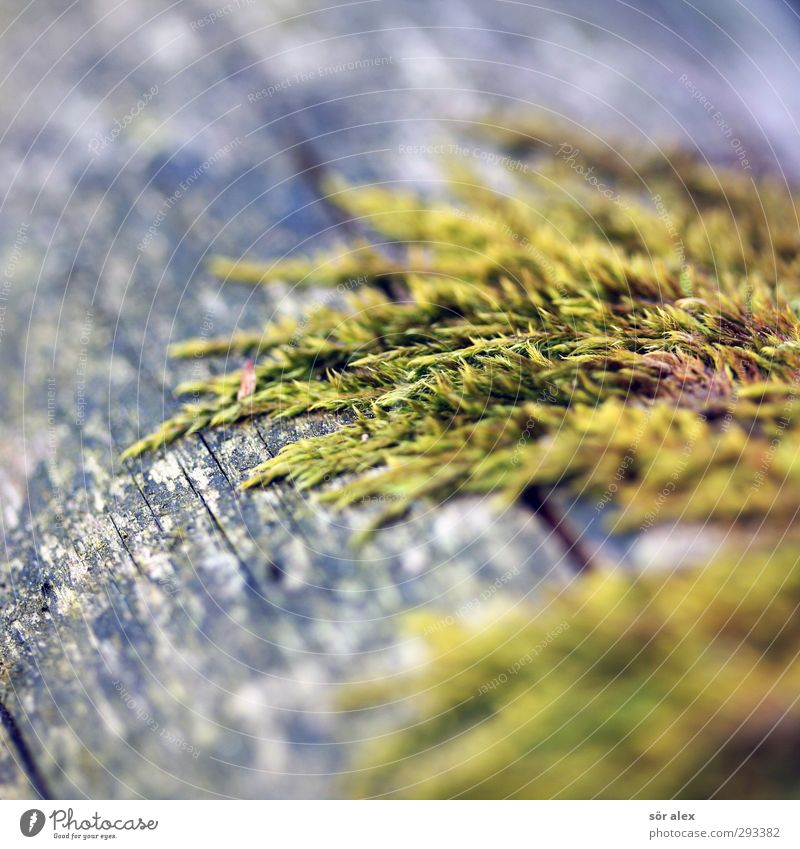 moostoupet Environment Nature Plant Animal Moss Wild plant Growth Green Sustainability Wood Carpet of moss Colour photo Exterior shot Detail