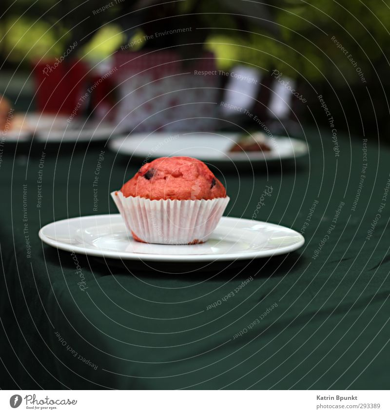 plate cake Food Cake Muffin To have a coffee Buffet Brunch Feasts & Celebrations Birthday Delicious Colour photo Exterior shot Copy Space bottom