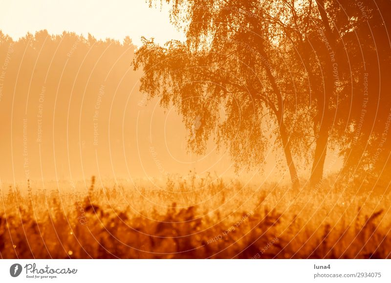 Early morning fog at sunrise Calm Environment Nature Landscape Autumn Weather Fog Tree Meadow Field Forest Yellow Red Moody Romance Idyll Morning fog Haze