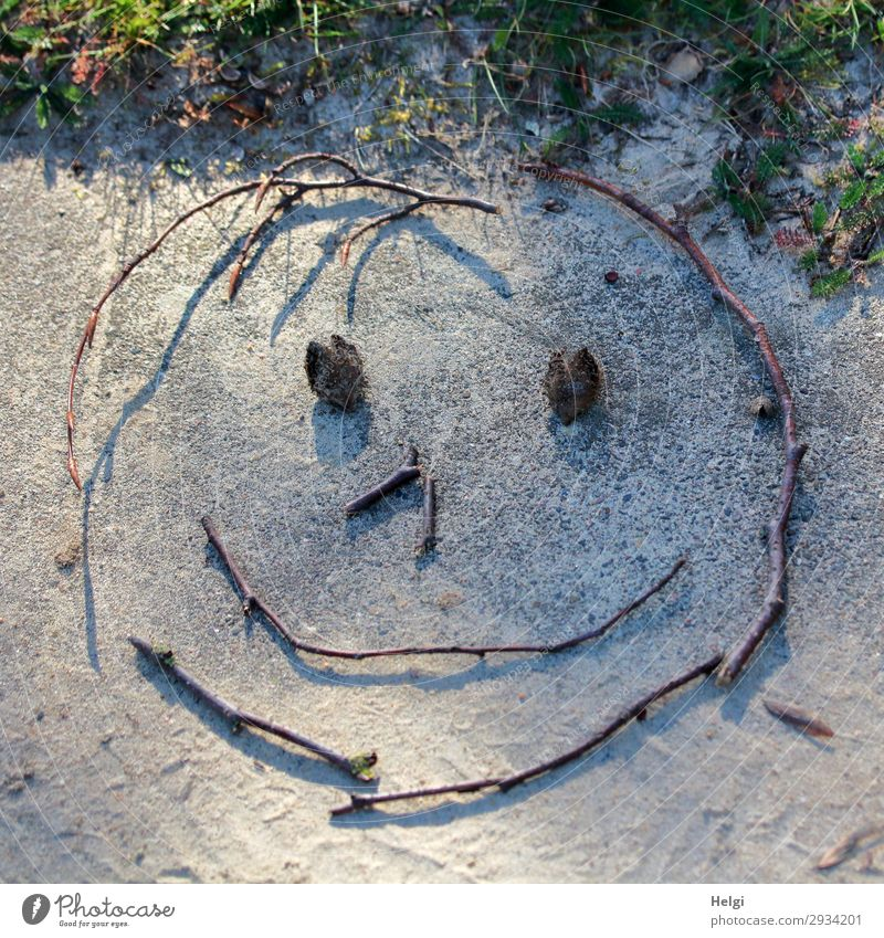 smiling face, laid out of twigs and beechnuts on a stone slab Plant Grass Decoration Smiley Twigs and branches Stone Sand Sign Line Smiling Lie Exceptional