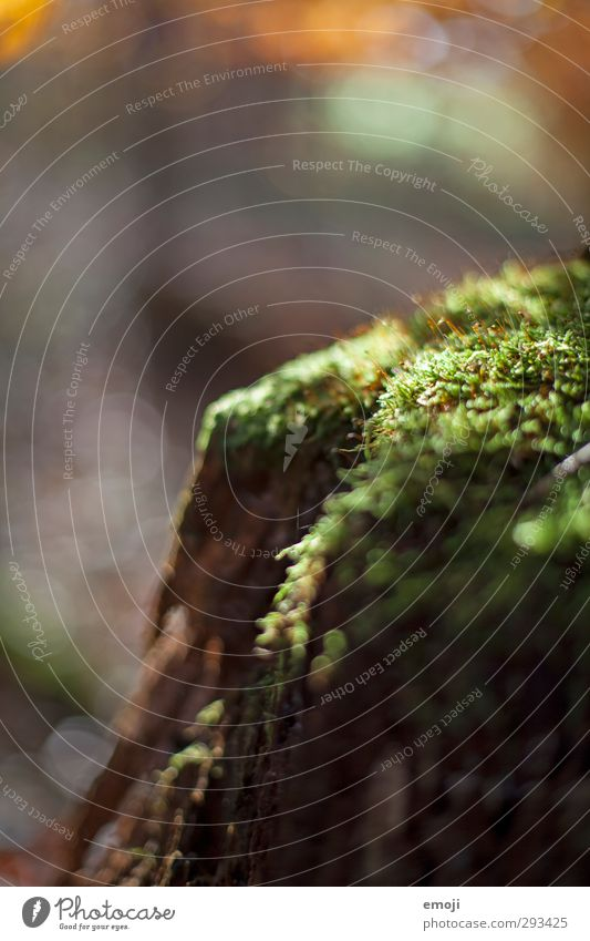 forest hideaway Environment Nature Plant Moss Foliage plant Natural Green Colour photo Exterior shot Close-up Detail Macro (Extreme close-up) Deserted Day
