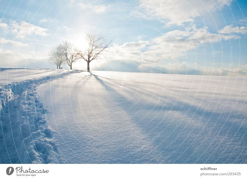 Sky Nature Blue Tree Sun Landscape Clouds Winter Calm Environment Mountain Snow Bright Ice Beautiful weather Frost