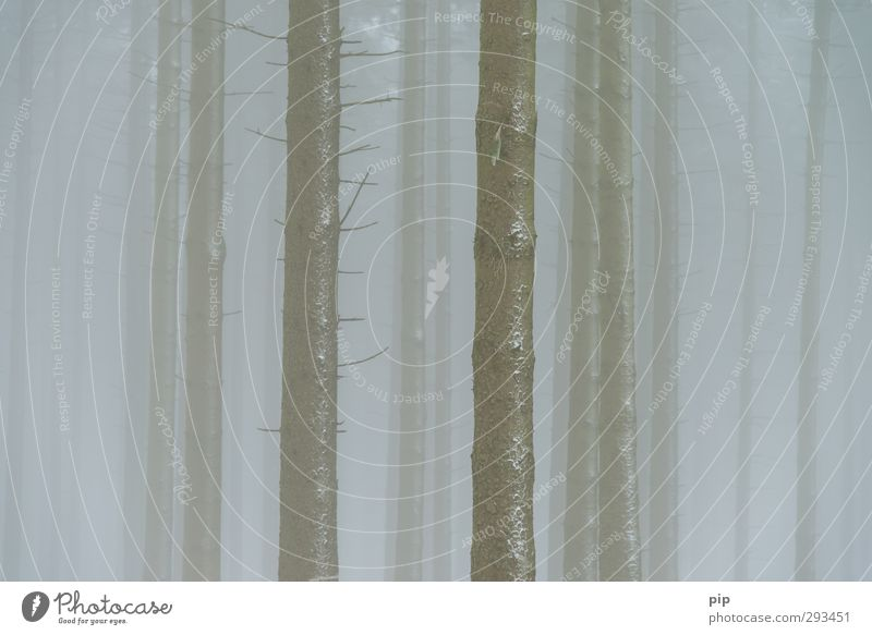 barcode Environment Nature Winter Bad weather Fog Tree Spruce Fir tree Coniferous forest Spruce forest Tree trunk Branch Forest Bizarre Environmental pollution