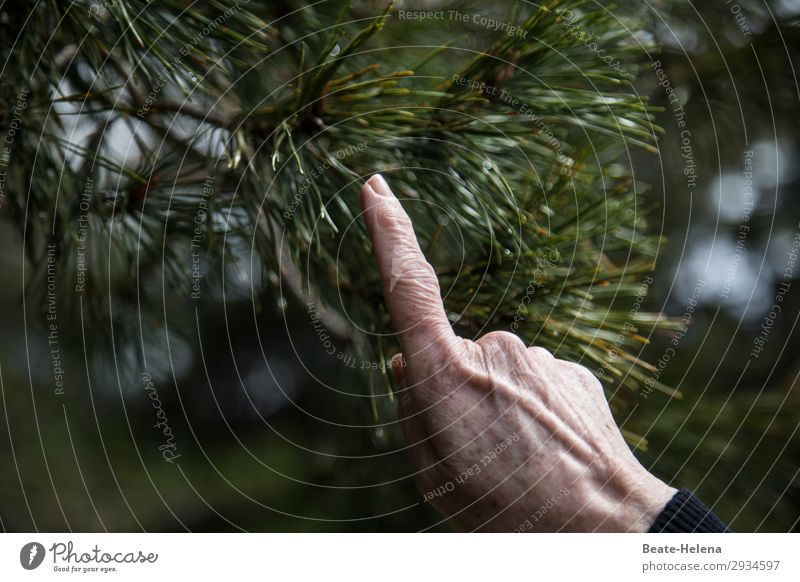 Hands - show with finger Fingers Nature Tree Forest Sign Work and employment Select Utilize Touch Movement Discover Painting (action, work) Authentic