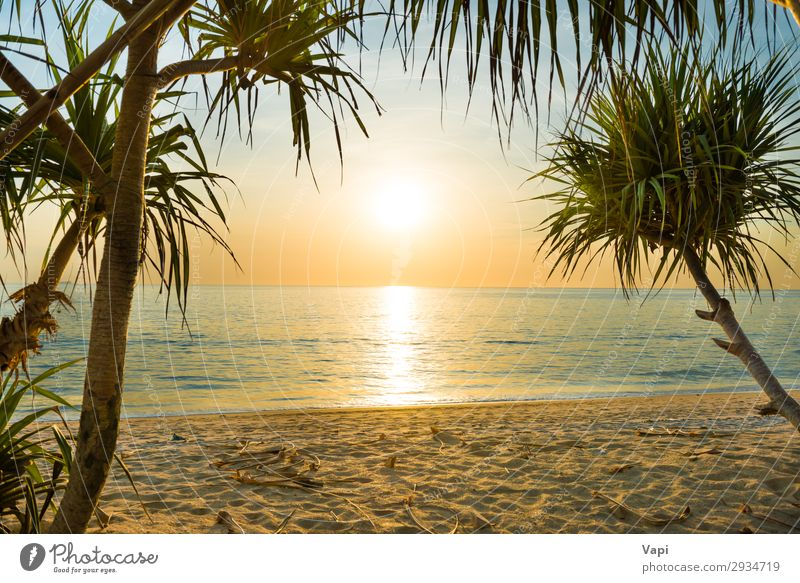 Sunset at tropical beach with palms Sky Vacation & Travel Nature Summer Blue Colour Beautiful Green Water White Landscape Red Tree Ocean Clouds