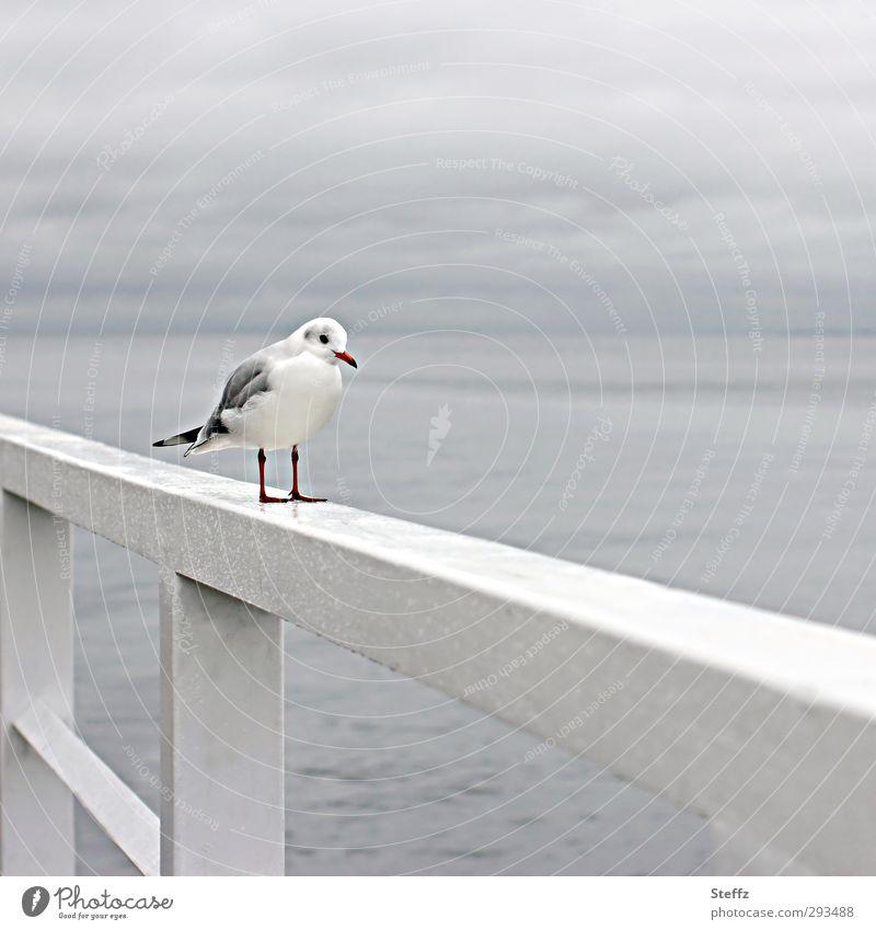 Now I'm standing here waiting. Nature Water Horizon Bad weather Rain Coast Baltic Sea Ocean Bird Seagull Wild bird Sea bird Stand Wait Wet Natural Gray Patient