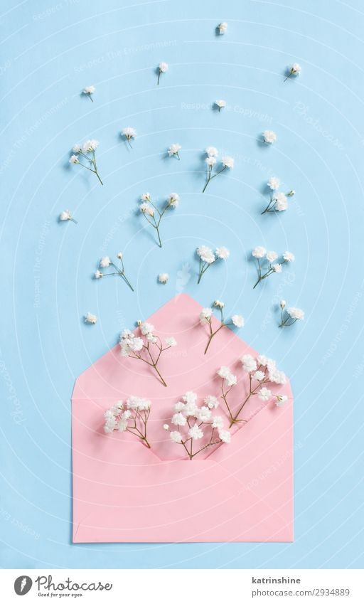 Flowers and envelope on a light blue background Woman Adults Above Design Decoration Creativity Wedding Mother Conceptual design Valentine's Day Mother's Day