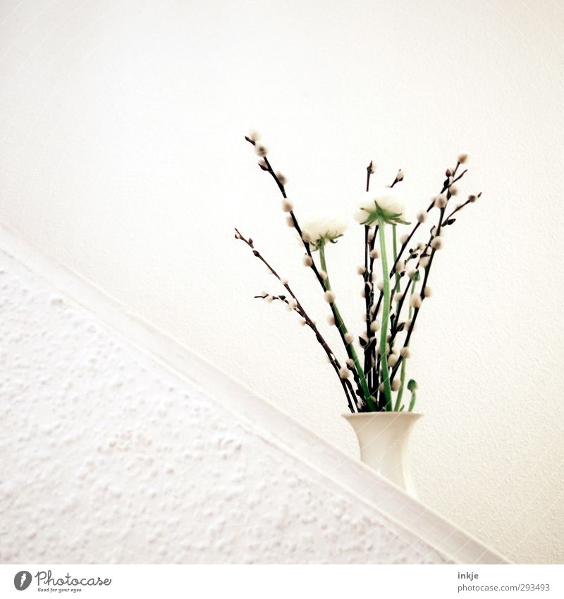 Beautiful White Wall (building) Spring Wall (barrier) Blossom Bright Stairs Living or residing Decoration Simple Blossoming Tilt Bouquet Wallpaper Diagonal