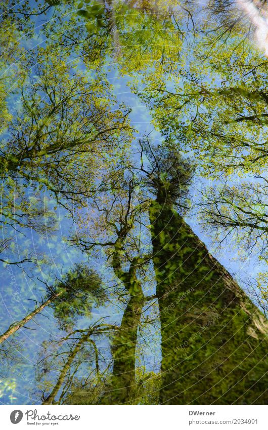 doubles Environment Nature Plant Elements Sky Sun Sunlight Spring Climate Climate change Weather Beautiful weather Tree Forest Virgin forest Blossoming