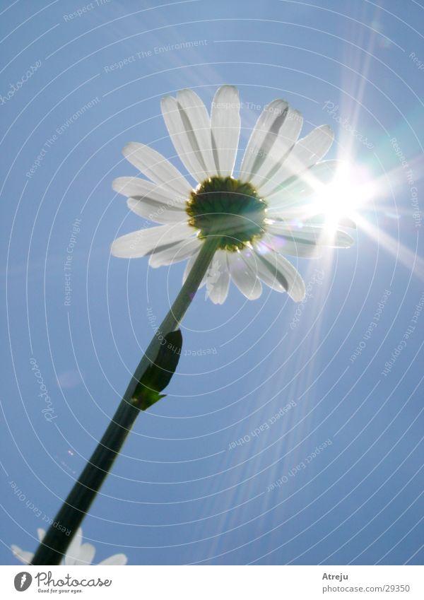 To the light Flower Lighting Summer Hot Spring Sun Sky aperture effect