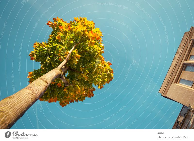 Coronet at the corner Environment Nature Plant Sky Cloudless sky Autumn Climate Weather Beautiful weather Tree House (Residential Structure) Building Facade