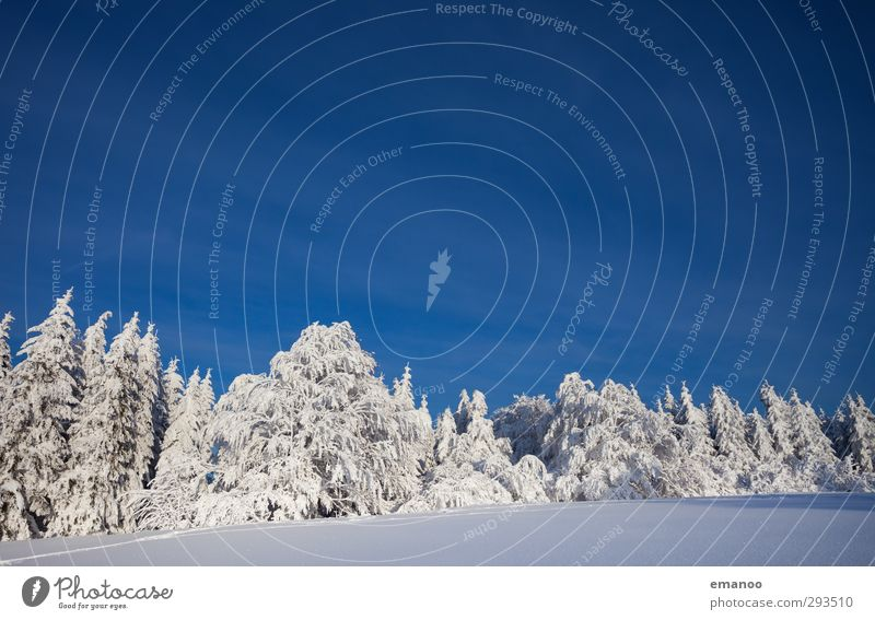 Sky Nature Vacation & Travel Blue Plant Tree Landscape Winter Forest Cold Environment Mountain Snow Ice Weather Wind