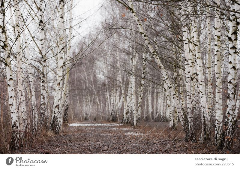 Beautiful White Plant Tree Loneliness Landscape Winter Calm Forest Sadness Lanes & trails Bright Dream Idyll Hope Transience