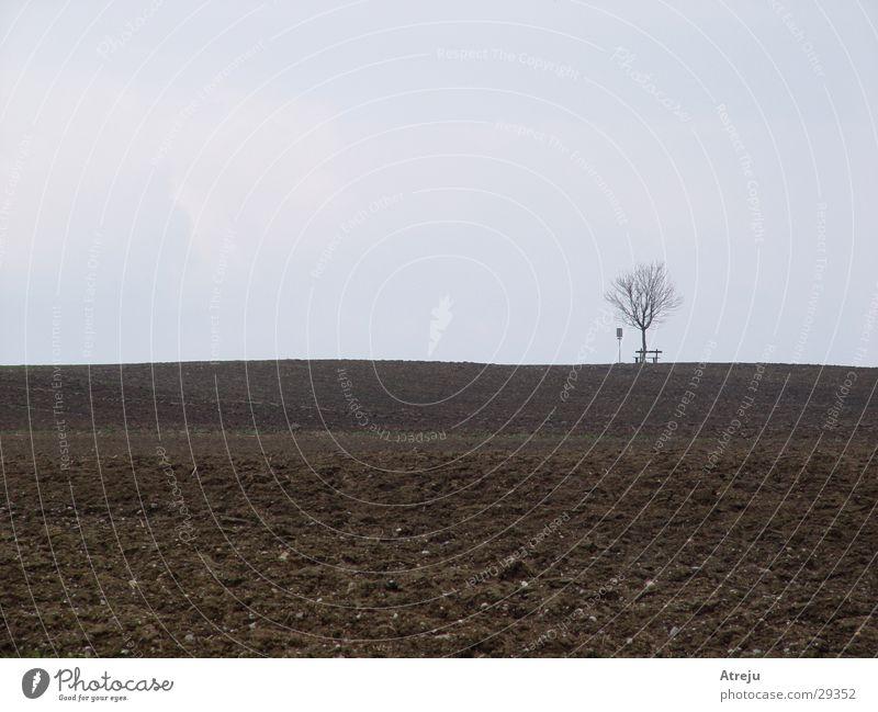 Tree Loneliness Autumn Gray Field Fog Bench