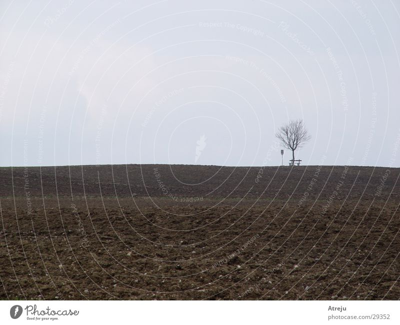 Tree Loneliness Autumn Gray Field Fog Bench