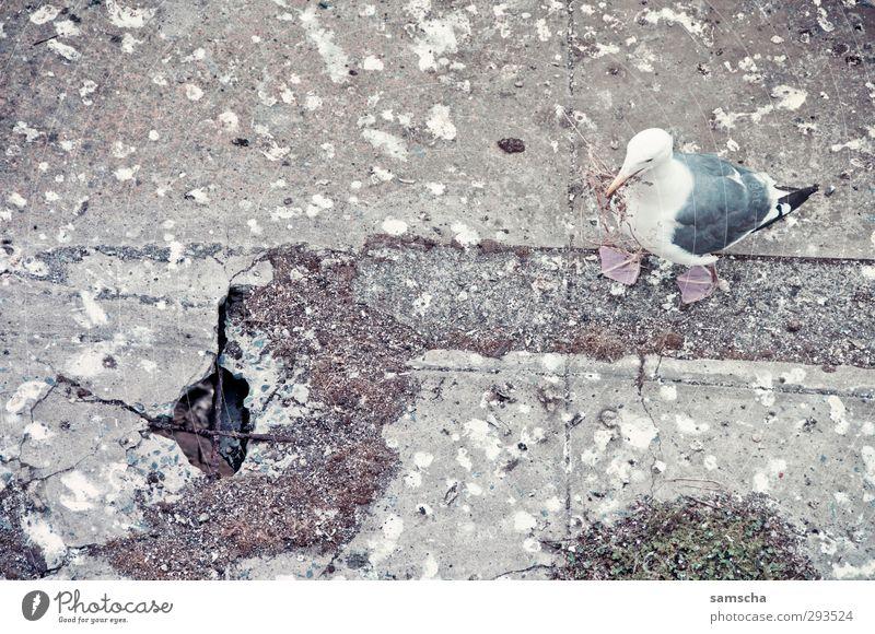 Nature Animal Environment Bird Flying Dirty Wild Wild animal Concrete Broken Feces Seagull Animalistic Trashy Disgust Nest