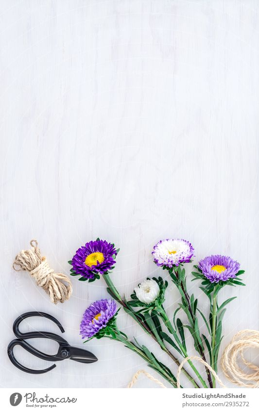 Bouquet of asters on white wooden background Nature Summer Plant Blue Colour Beautiful Green White Flower Wood Blossom Natural Garden Copy Space Design