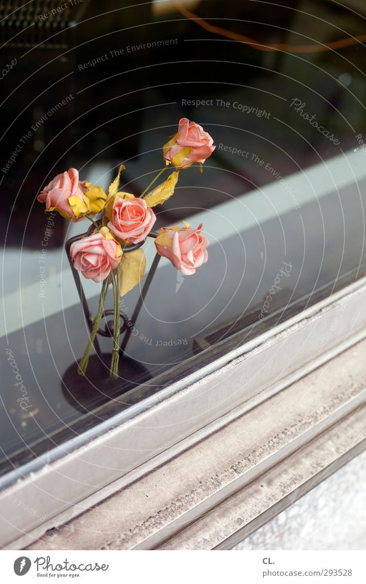 bonjour tristesse Plant Flower Rose Leaf Blossom Window Blossoming Faded To dry up Dirty Pink Decline Transience Office Gloomy Sadness Decoration Window board
