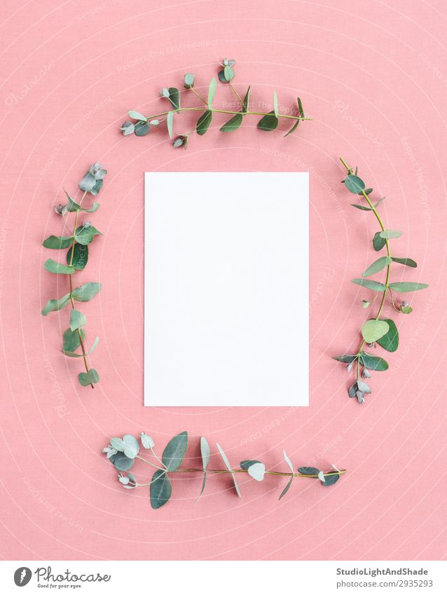 Blank paper sheet framed by eucalyptus branches Nature Plant Colour Beautiful Green White Leaf Natural Style Copy Space Fashion Pink Design Decoration Fresh