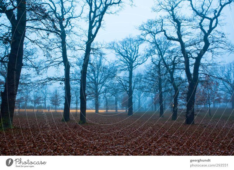 Nature Blue Plant Tree Landscape Calm Black Forest Environment Death Autumn Emotions Sadness Gray Garden Brown