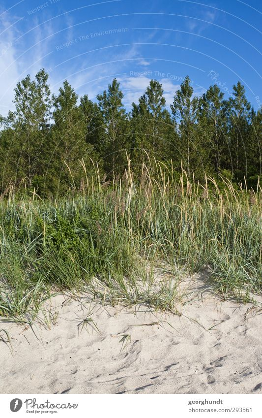 Blue Green Summer Plant Tree Sun Ocean Beach Relaxation Forest Meadow Grass Playing Coast Field Leisure and hobbies