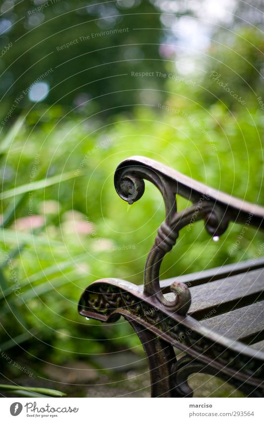 Place of rest Elegant Design Wellness Well-being Contentment Relaxation Calm Meditation Cure Bench Seating Gardening Drops of water Rain To enjoy Sit Wait Wet