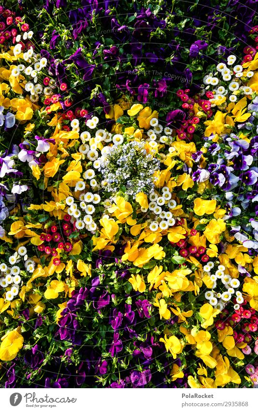 #S# Flower Power Environment Nature Plant Esthetic Beautiful Flower meadow Garden Bed (Horticulture) Multicoloured Natural To enjoy Pansy Pansy blosssom Spring