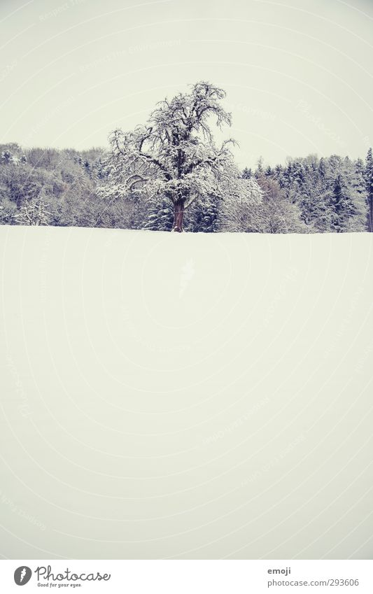 sucré Environment Nature Landscape Winter Snow Tree Field Cold White Colour photo Subdued colour Exterior shot Deserted Copy Space top Copy Space bottom