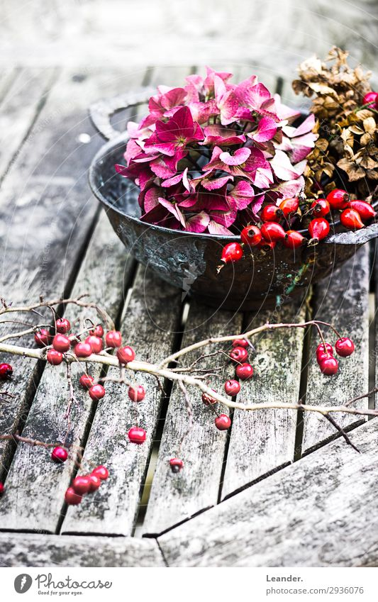 Autumn Art Nature Garden Park Decoration Kitsch Odds and ends Gardening Red Tomb Cemetery Floristry Colour photo Exterior shot Deserted Copy Space left