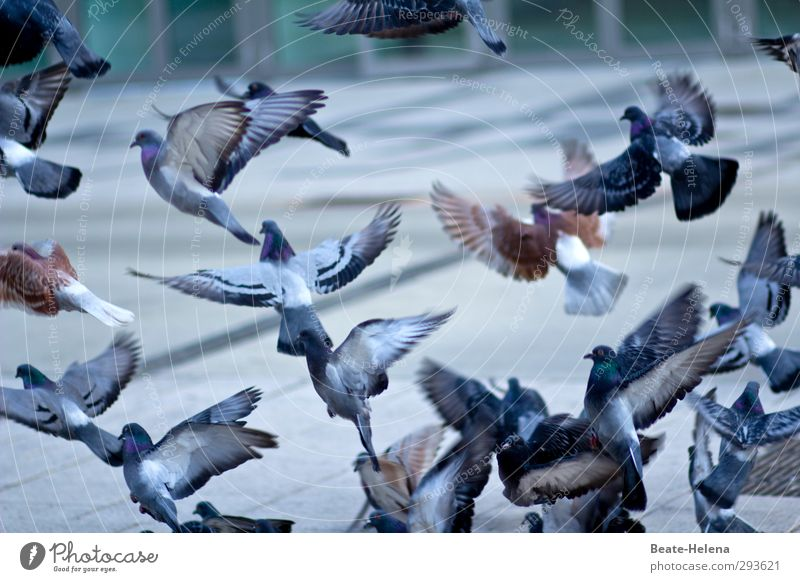Hitchcock sends his regards Environment Winter Beautiful weather Town Downtown Animal Bird Pigeon Group of animals Flying To feed Feeding Wait Infinity Crazy